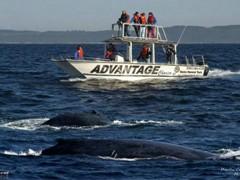 7Whale watching